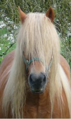 Capture crinière poney