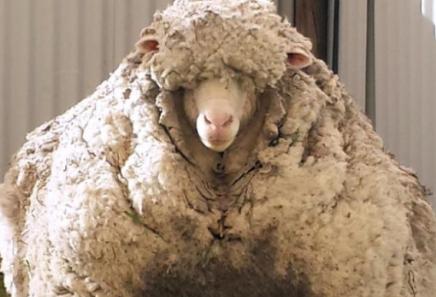 mouton produits cheveux naturels bio biotifullpeople.PNG